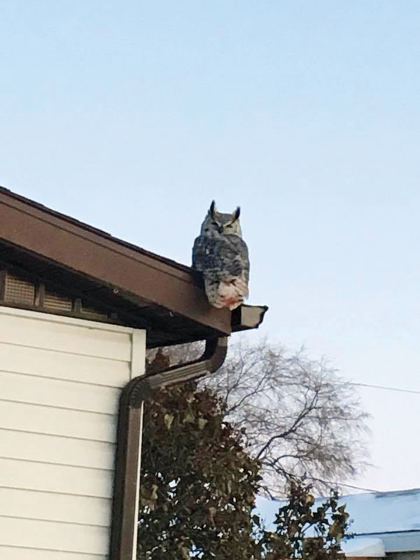 Owl-on-First-Avenue-South