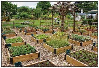 https://martensvillemessenger.ca/wp-content/uploads/2020/05/community-garden-pic.jpg